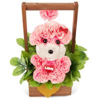 비누꽃_분홍푸들2